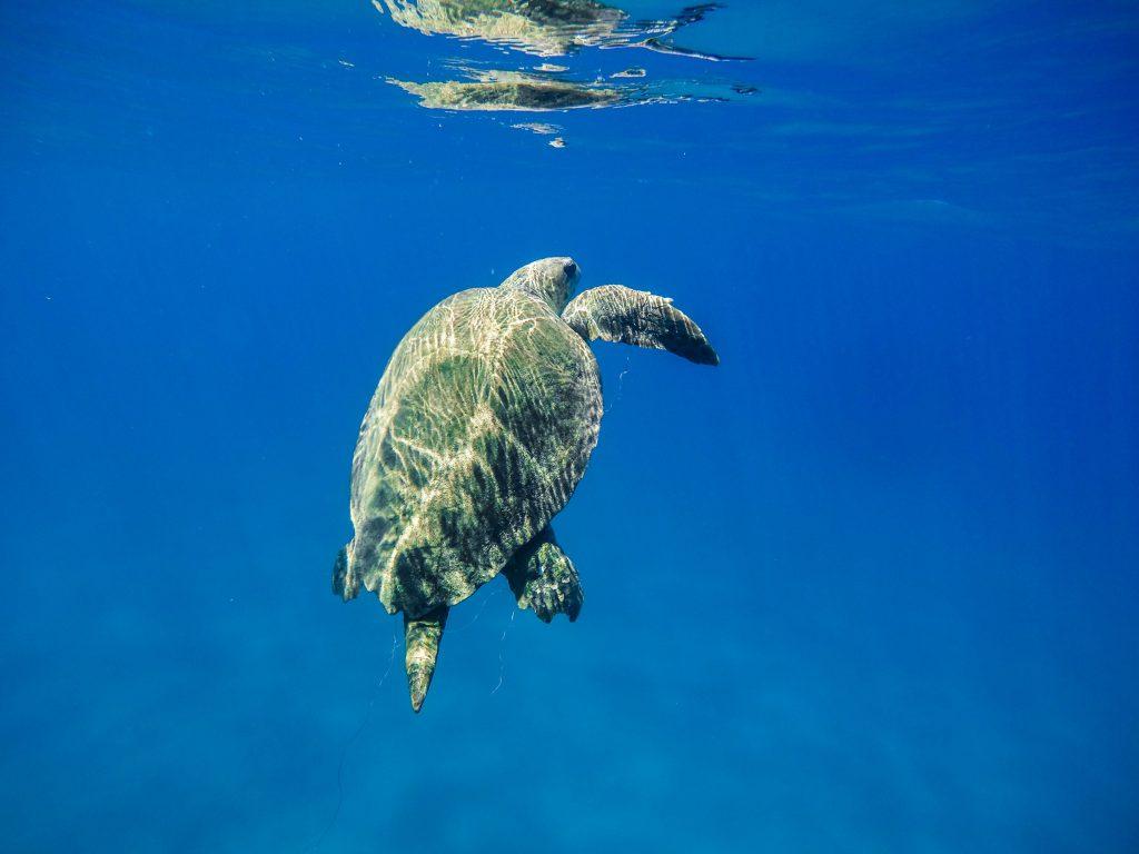 Urlaubsziele Zakynthos Schildkröte