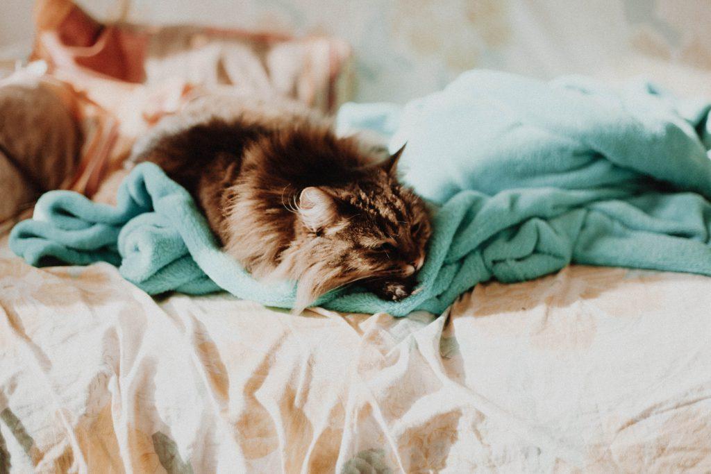 Morgenroutine Katze