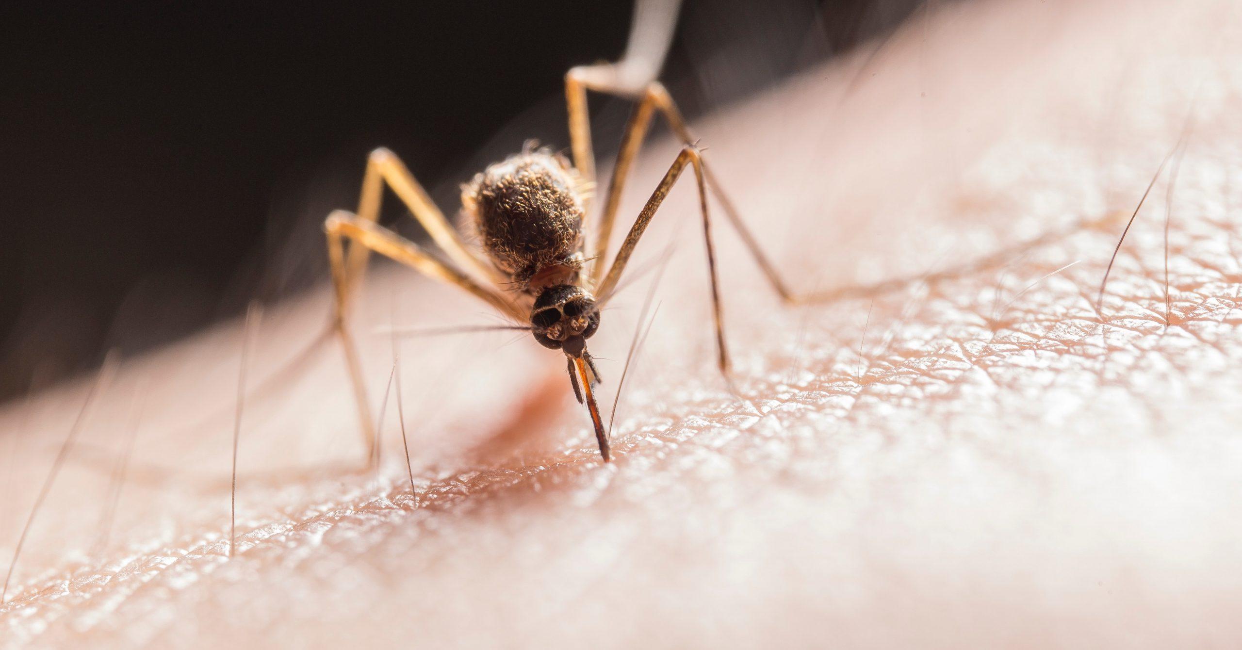Insektenschutz: Kleidung – Tipps und Tricks gegen lästige Mücken