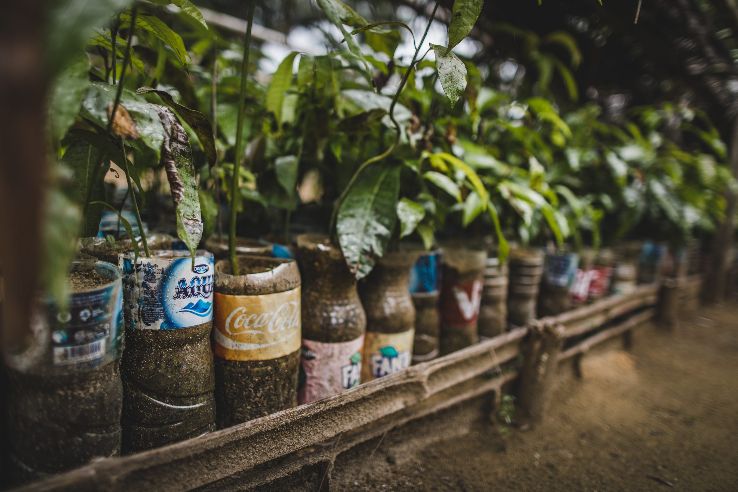 Neu bei engelhorn: TenTree - Eine Marke, eine Story
