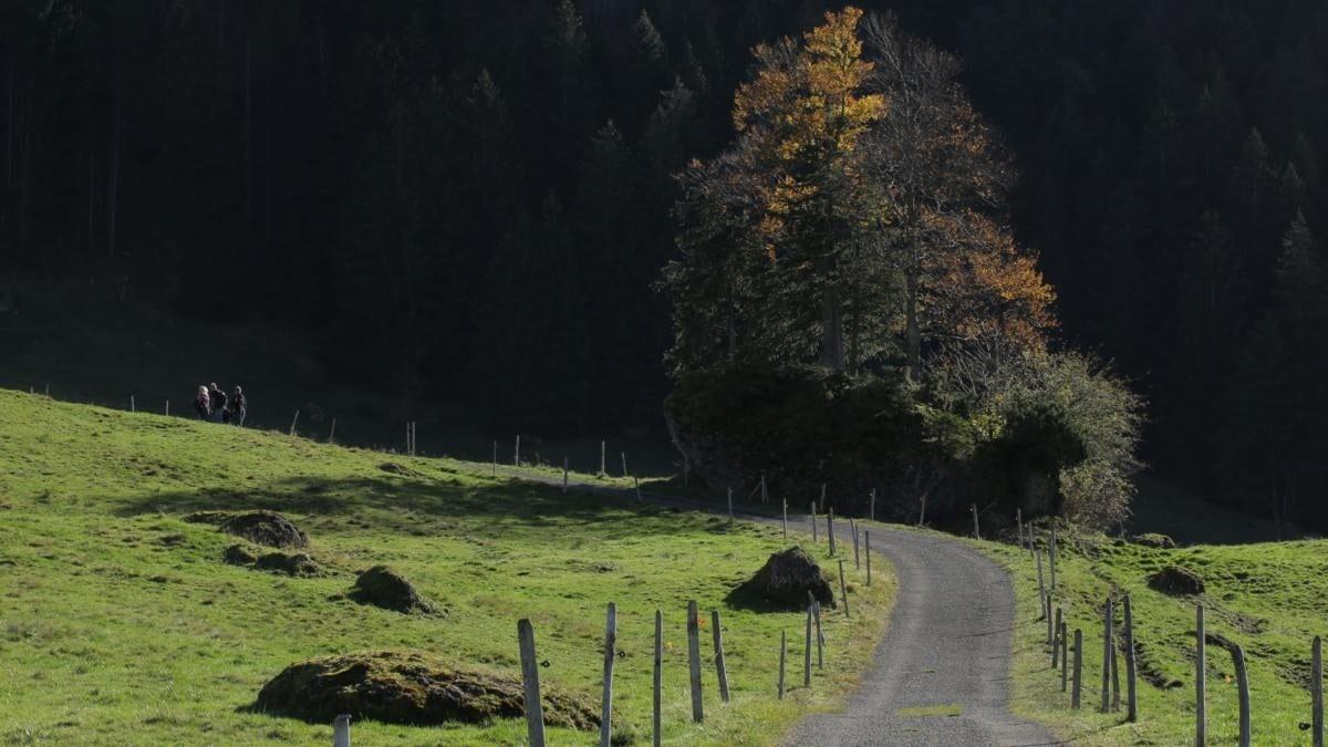 Leichte Herbstwanderung von Immenstadt zum Naturfreundehaus