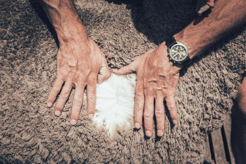 Tasmanien - die Herkunft von Ortovox' Merinowolle