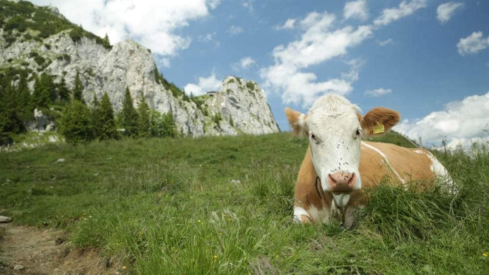 Wanderung zur Tegernseer Hütte – Adlernest der bayrischen Voralpen