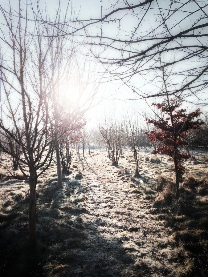 Winterschlaf - So schlaft ihr auch im winter gut
