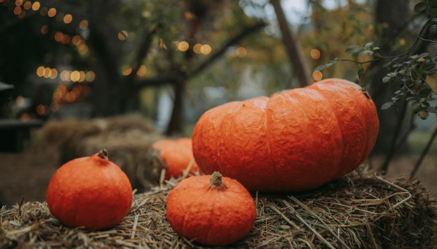 3 einfache Kürbis-Rezepte für den Herbst